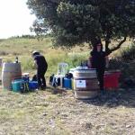 marchés Hérault vente vins Mas de clanny