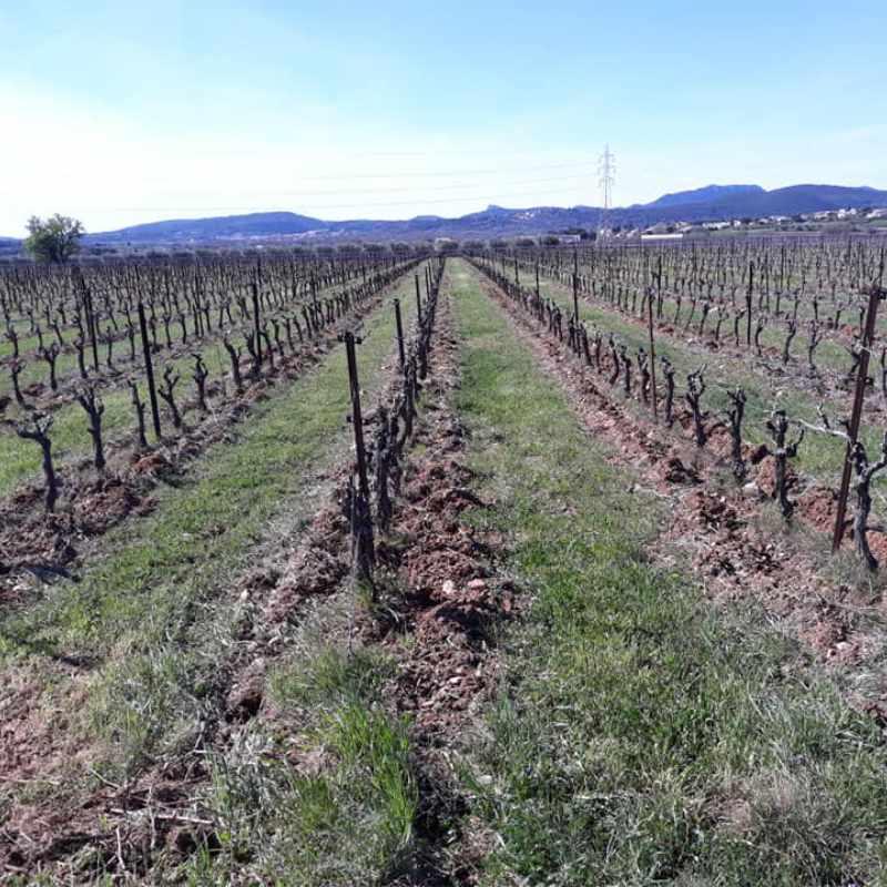 vignes Mas de Clanny Vin bio Agriculture biologique