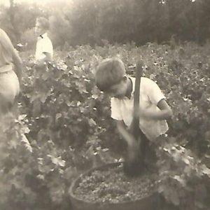 Histoire familial domaine Mas de Clanny